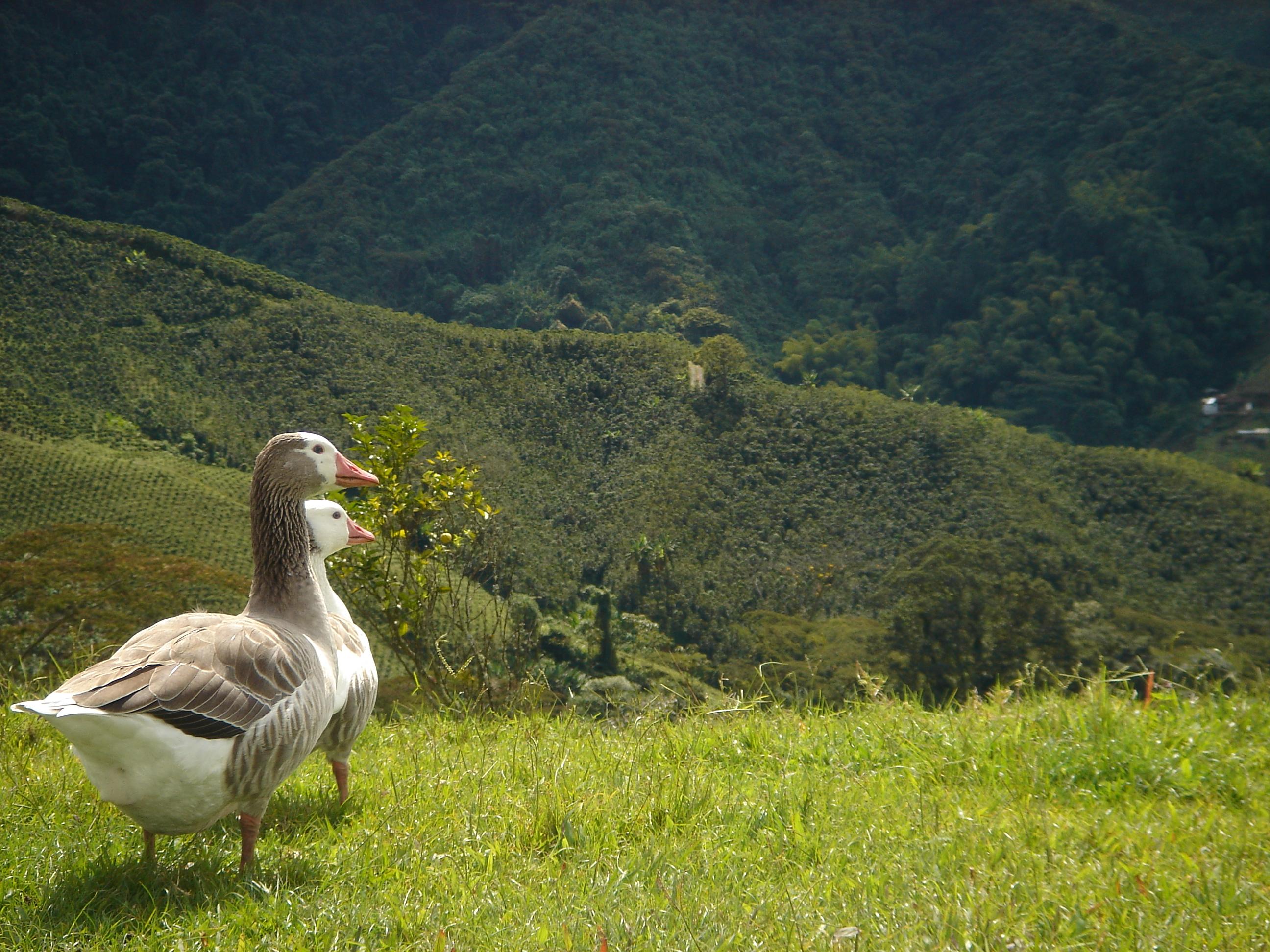 Landscape-Patos
