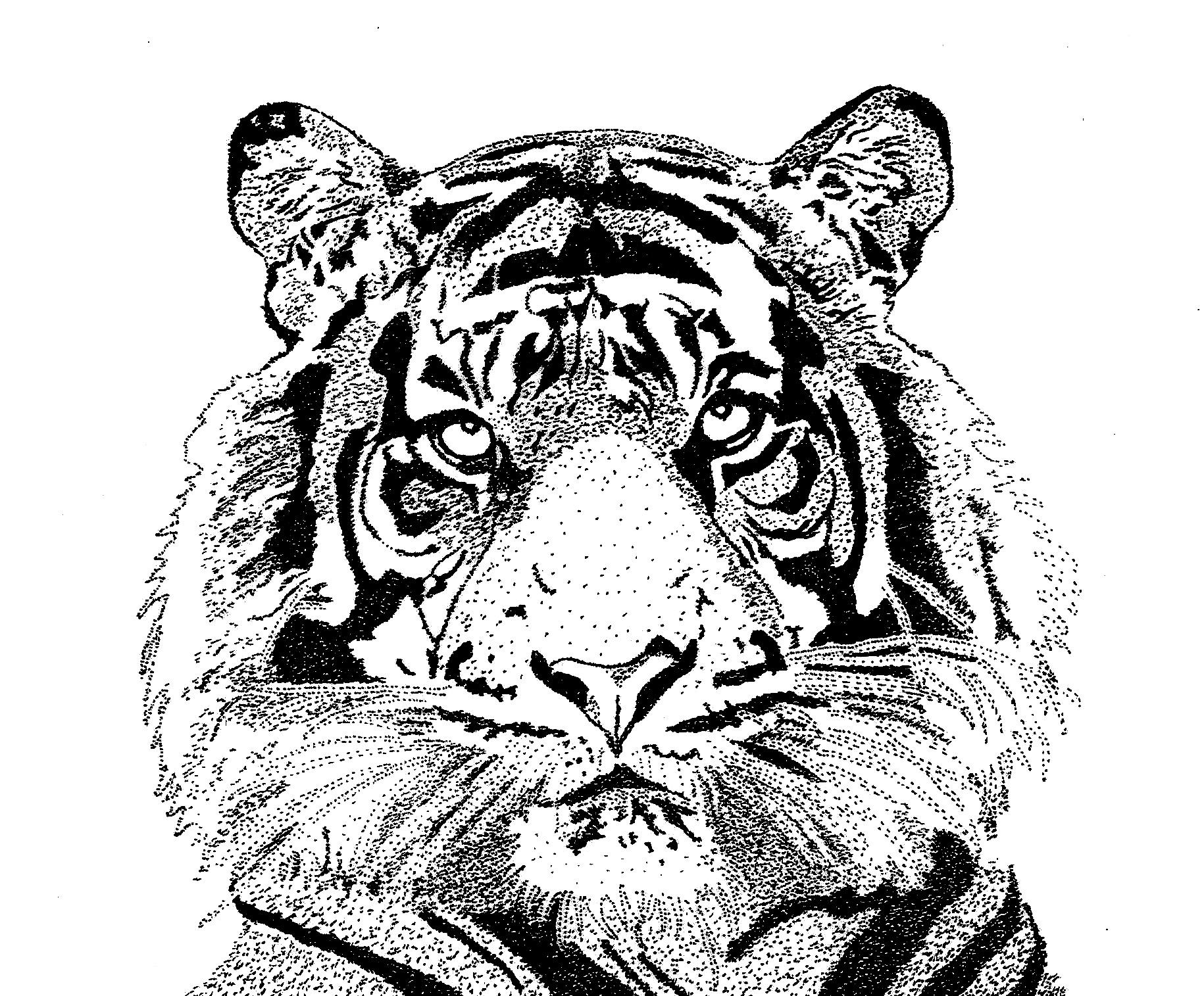 Tigre-Sandra C. copy