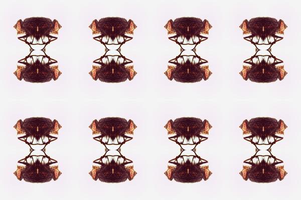 Lateral-mosca-ojo-estereo