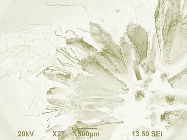 MustafaN-florecita coloreada