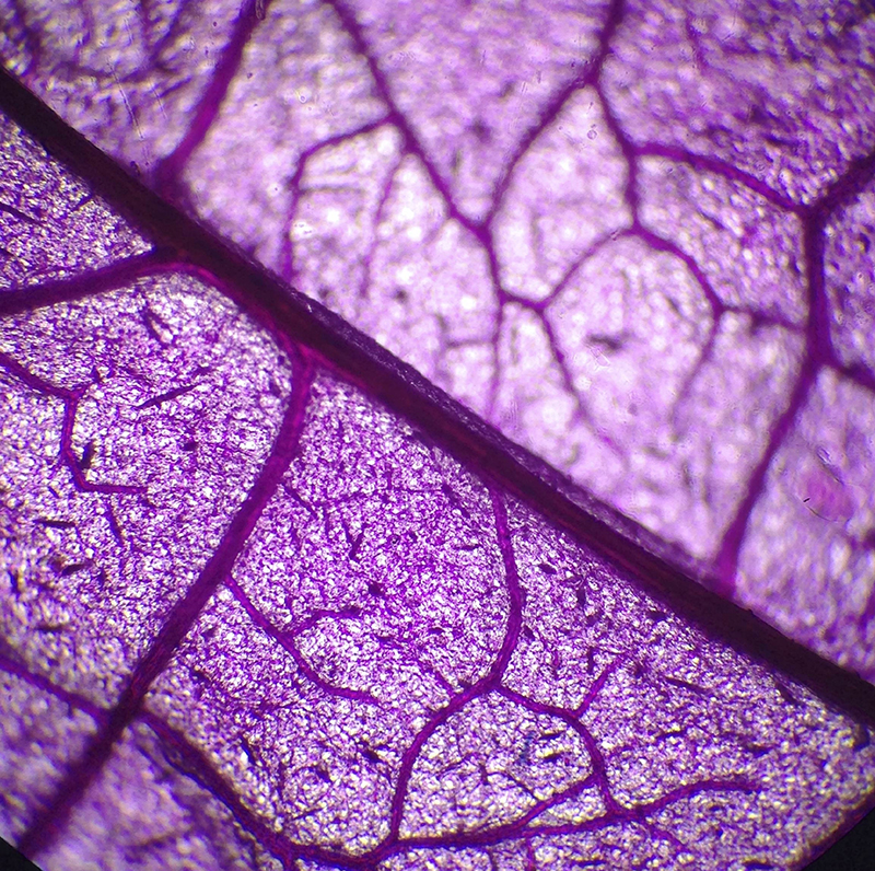 ago6:optico:petalodeflor2 Rodriquez MariaP