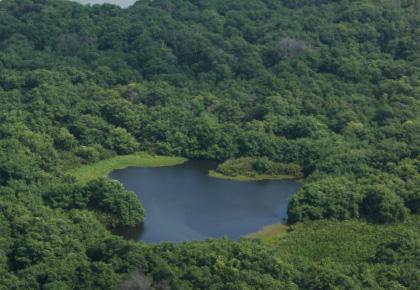 El sistema de Manglares en el Delta del Río Atrato era hasta hace poco un parque natural regional.